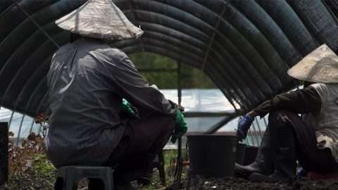 An elderly Vietnamese man and woman wearing gloves and nón lá sit facing away from the camera on small plastic stools, underneath an arched canopy and alongside raised dirt rows with some green vegetables.